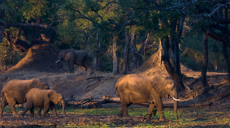 South Luangwa - Track and Trail River Camp